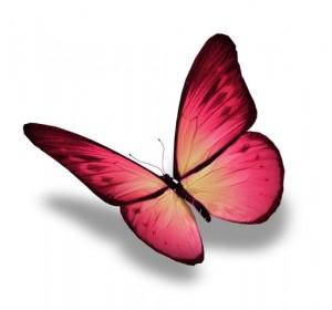 Butterfly MMM